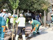 Над 200 нови дървета облагородяват и променят облика на Мирково